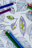 Adult antistress colouring book. With pencils Stock Photography