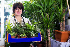 Adult assistant tending numerous green plants Stock Photos