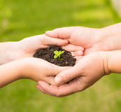 Adult and baby holding young plant in hands Royalty Free Stock Photos