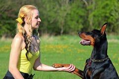 Adult, Beautiful, Canine Stock Photo