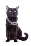 Adult black cat Stock Photo