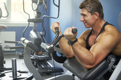 Adult bodybuilder trains biceps in the gym.  Royalty Free Stock Photography