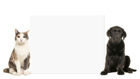 Adult cat and black labrador puppy dog sitting beside a white empty board with space for text. Isolated on a white background stock photos