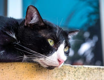 Adult cat lay in outdoor corridor Royalty Free Stock Images