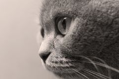 Adult cat portrait, close-up portrait of eyes, isolated stock photos