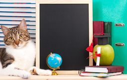 Adult cat Royalty Free Stock Photo