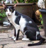 Adult cat sit in garden Royalty Free Stock Photos