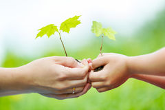 Adult and child holding little green plant in hands. Ecology concept Stock Image