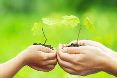 Adult and child holding little green plant in hands Stock Images