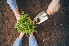 Adult and child holding seedlings Royalty Free Stock Photos