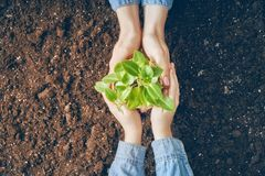 Adult and child holding seedlings. Concept of generation and development. Adult and child are holding in hands seedlings. Spring, nature, eco and care Stock Photos