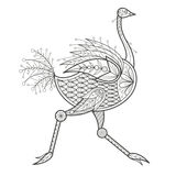 Adult Coloring - ostrich. Royalty Free Stock Photos