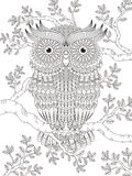 Adult coloring page with gorgeous owl Royalty Free Stock Photos