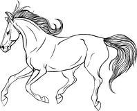Adult coloring page horse. Royalty Free Stock Photo