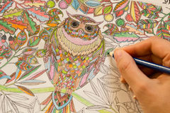Adult colouring books with pencils, new stress relieving trend, mindfulness concept person coloring illustrative. Adult colouring books pencils, new stress royalty free stock photography