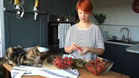 Adult couple man and woman peel and cut strawberries for strawberry jam, feed each other, laugh and have fun, the Maine Coon kitte. N sits on the kitchen table stock video footage