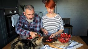 Adult couple man and woman peel and cut strawberries for strawberry jam, feed each other, laugh and have fun, the Maine Coon kitte. N sleeps on the kitchen table stock video