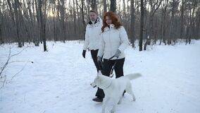 Couple walking with white dog. Adult couple walking together with white dog in forest covered with snow stock video