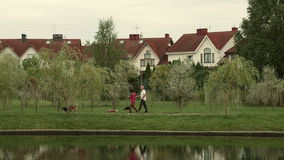 Adult couple walks with the dogs. Autumn daytime. Smooth dolly shot stock video footage