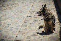 Adult dog abandoned on the street stock photo