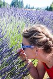 An adult female sniffs wild lavender flowers in Oregon. Selective focus for artistic purposes. An adult female sniffs wild lavender flowers in Oregon. Selective stock images