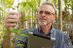 Adult gardener in the garden shop inspects plants. In the glasses, a beard, wearing overalls stock photos