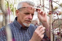 Adult gardener inspects plant diseases. The hands holding the tablet. In the glasses, a beard, wearing overalls. In the garden stock image