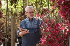 Adult gardener near the flowers. The hands holding the tablet. In the glasses, a beard, wearing overalls. In the garden shop stock photography