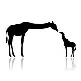 Adult giraffe feeding cub. Vector illustration as silhouette of giraffe female feeding her cub Stock Photography