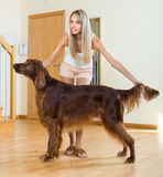 Adult girl with red Irish setter Stock Images