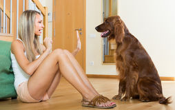 Adult girl with red Irish setter Stock Image