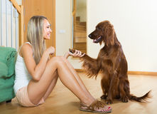 Adult girl with red Irish setter Stock Photography