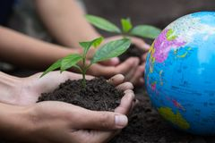 The adult hand and child hand hold a small tree beside the globe, plant a tree, reduce global warming, World Environment Day.  stock images