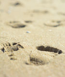 Adult human footprints or steps foot on yellow wet beach sand on the surface of the sea water in the open air on the sand texture. Background Royalty Free Stock Image