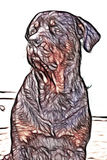 Illustration Of An Adult Male Rottweiler royalty free illustration