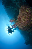 Adult male scuba diver photograhing underwater. stock photos