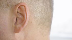 Adult man with gray temple moving ear closeup. Male ear macro shooting side view. Adult man with gray temples moving ear close up. Male ear macro shooting, side stock footage