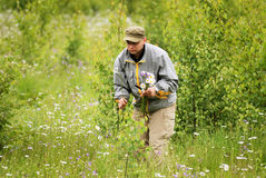 Adult man picking flowers. On the meadow stock photography