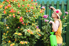 Adult man with pump garden sprayer Royalty Free Stock Images