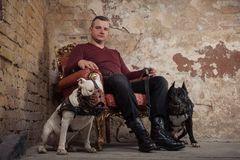 Adult man satting in a vintage armchair on the background of a peeled wall. On each side the man sitting two dogs. black pit bull. Or stafforshire terrier Stock Photos