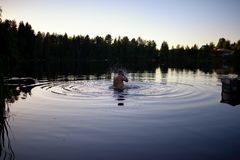 Adult man splash water in forest lake Stock Images