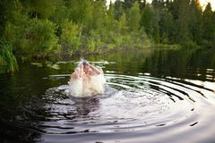 Adult man splash water in forest lake Stock Photography