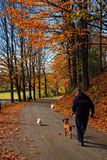 Walking the dog on an autumn day stock photo