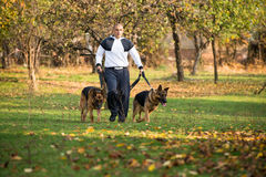 Adult Man Walking Outdoors With His Dogs German Shepherd Stock Photo