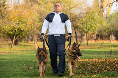 Adult Man Walking Outdoors With His Dogs German Shepherd Royalty Free Stock Image