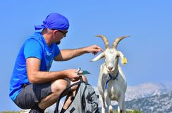 Adult Men Goat High Mountains. Adult Men in blue and curious white goat at the top of the hill Stock Image