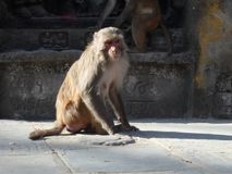 Sunny day in monkey temple stock photo