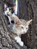 Adult mother cat help its daughter Stock Photo