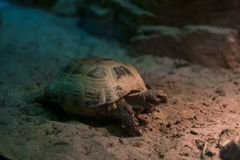 Turtle on the sand royalty free stock photography