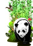 Adult panda and ducks in a thicket of bamboo. Royalty Free Stock Photography